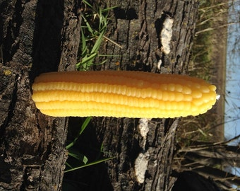 Corn Cob Candle ~ 100% Pure Beeswax