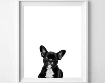 Puppy Print, Puppy Photography, Black And White Animal Print, Puppy Wall Decor, Puppy Print, Pets, Nursery Art, Printable Art