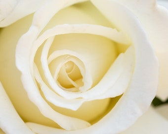 White Rose Wall Art, Fine Art Photography, Home Decoration, Bathroom Art, Bedroom Art, Square Photo, Ivory Wall Art, Romantic Decor, Cream