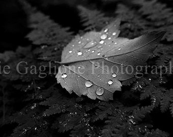 Macro Leaf with Droplets (8x10 Framed)