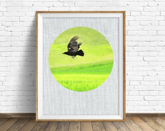 """nature photography, instant download printable art, large wall art, bird, wildlife, large art, feathers, nature print, wall art - """"Flight"""""""