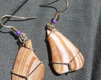 Atlantic Clam Shell Earrings