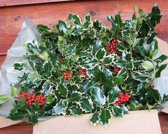 Fresh Loose Boxed Holly