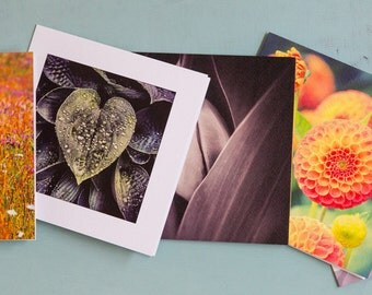 Set of 3 Photographic Greeting Cards