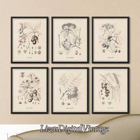 Wall art set, Printable vintage art, Set of 6 prints, Fruit trees, Rowan, Plum, Crab apple, Rum cherry, Viburnum, Hawthorn, JPG files
