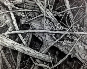Mangrove V ~ Drawing by Dawn Rosendahl ~Original Pencil Drawing~