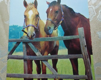Two Horses by a Fence Vintage Postcard Paper Ephemera
