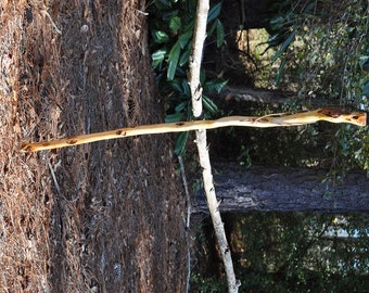 Beautiful Diamond Willow Walking Stick, Hiking Stick, Natural Diamond Willow