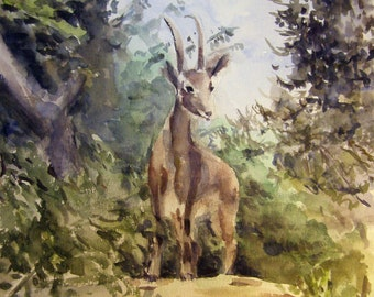 Ibex on the rock. Print of Israeli wildlife watercolor painting. Home decor, office decor, or greeting card.
