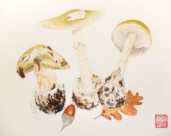 Original watercolor of the Death Cap - Amanita phalloides
