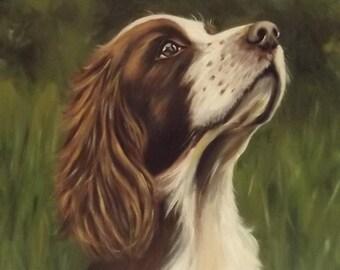 Springer Spaniel Painting.