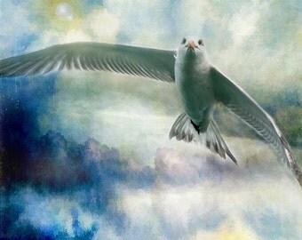 Royal Tern Light