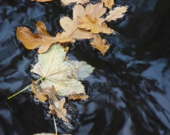Leaves on the canal