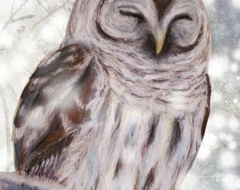 Barred Owl  Giclee Print
