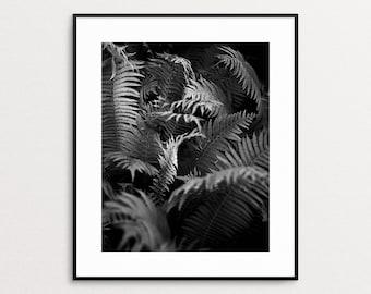 Black and White Botanical Print - Fern Print - Fern Art - Photography - Modern Wall Art - Botanical Art - Forest Art - Giclee Print - Ferns