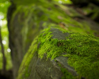 Photography / Nature Photography - Moss I