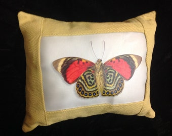 Butterfly (Agriafclaudina) Decorative Pillow