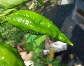 Pepper Seeds, Ghost Pepper Seeds, Ghost Pepper, Bhut Jolokia, 20 Seeds Per Pack, Pepper Seed Packs