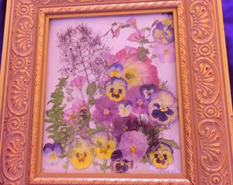 Dried Botanical Picture Pansies, Wild Morning Glories Framed