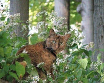 Green-Eyed Calico Cat in Wildflowers Photograph