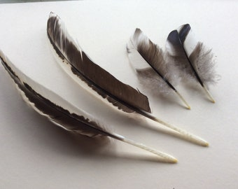 4 x Feathers black and white
