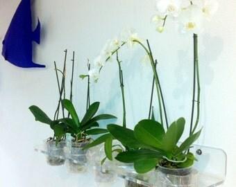 Plants pots shelf plex