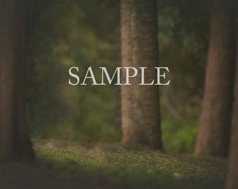 Forest Digital Backdrop