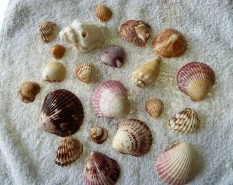 Shellfish gross lot no. 123
