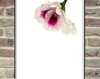 Purple and White Flower, Digital Download, Flower Photography, Wall Art, Cottage Decor, Dreamy Photo, Valentines Quote, Valentines Gift