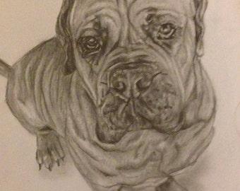 Custom portrait - Dog framed