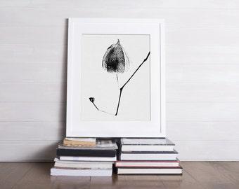 Fine art photography, physalis, lantern, zen flower, Photographie, art et collections, zen image