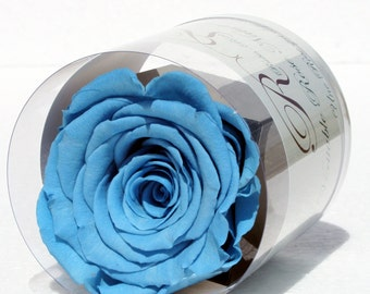Blue stabilized eternal rose