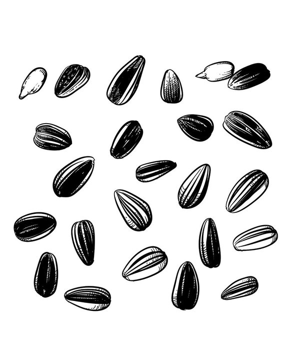 80% Off Sale Sunflower seeds isolated on white background.