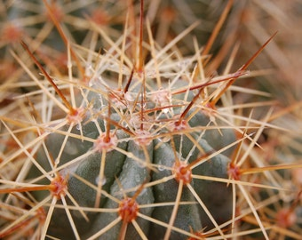 N4 - Rain Drops on Cactus