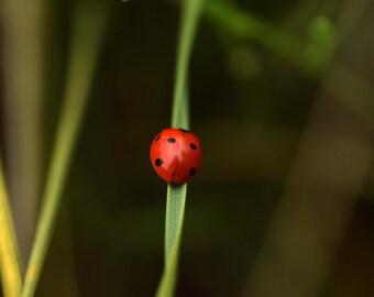 R7 - Ladybug grass 5
