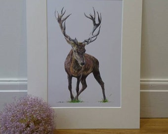 Buck The Stag