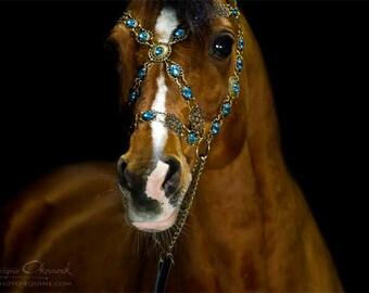 Arabian Show Halter FULL Blue Baroque - New Colour