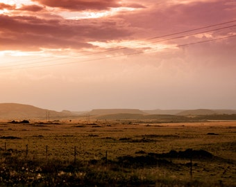 Scene From the Road III: WALL ART Fine Art Photography Color Landscape New Mexico Cattle Sunset Dramatic Light Sky Purple Yellow Rain