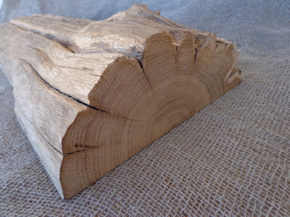 Oak Wood Branches ~ Oak wood slice natural supplies nature supply diy