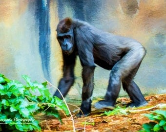 The Gorilla - original photograph, digital download, painterly photo