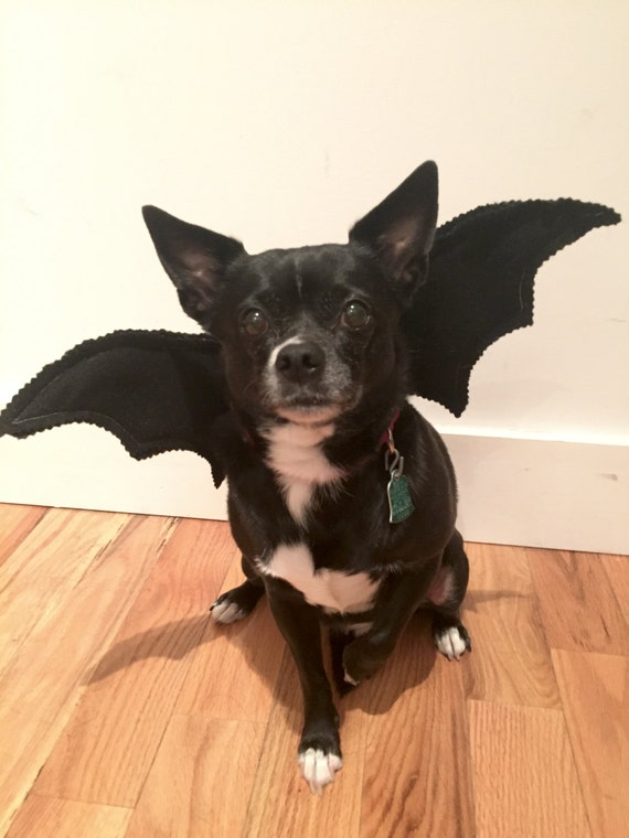bat wings cat costume bat wings dog s bat costume adorable for halloween toy 1021