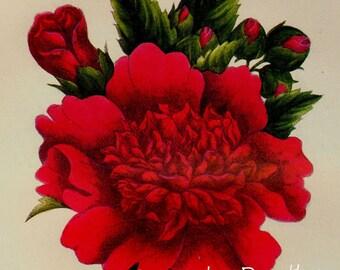 Althea Rose Of Sharon Prestele Vintage Poster Print  Botanical Lithograph To Frame 310