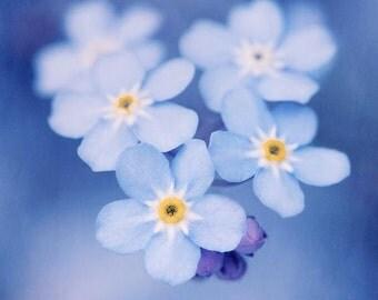 Forget Me Not Flower Print, Flower Wall Art, Flower Photography, Spring Art, Fine Art Photography Print, Spring Flower, Spring Photography