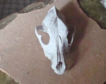Canine Dog Skull Weathered Old Found Object for Assemblage, Altered Art