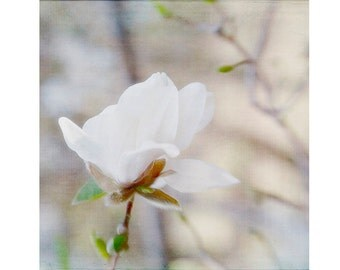 White Magnolia Photograph, Woodland Decor, Neutral Art, Nature Photography, Cottage Decor, Magnolia Art, Rustic Print