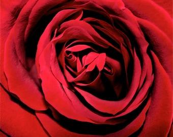 Red Rose Note Set