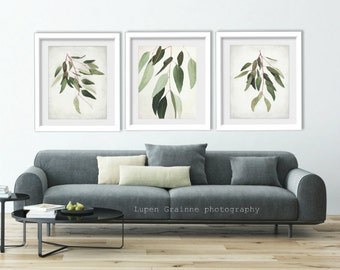 "Eucalyptus nature wall art botanical prints minimal modern sage green leaves photographs 11x14 8x10 ""Eucalyptus Sprig Set of Three"""