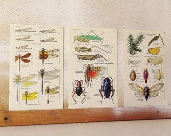 Vintage Dragonfly Print Grasshopper Bookplate Insect Print Damselfly Cricket Cockroach Katydid Cicada Scientific Entomology Natural History