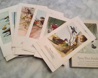 Vintage Game Bird Families Postcards, Series No. 4, Set of 29