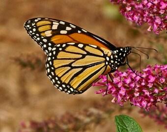 Butterfly Photograph, Wildflower Print,  Monarch Photo, Orange and Black, Fine Art Print, Nursery Photo, Childrens Room Decor Bathroom Print
